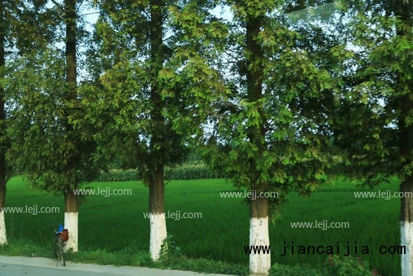 乔木和灌木的区别是什么